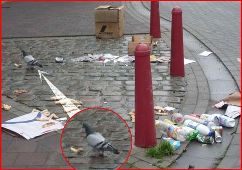 pigeons_Vercruysse_Dominique_NM.jpg